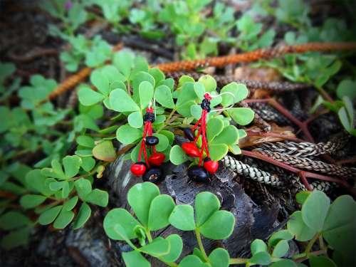 Boucles d'oreilles Rouges & Noires
